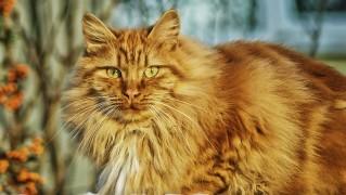 猫 ネコ 猫の顔 猫の目 動物 ネコの鼻 雪 自然