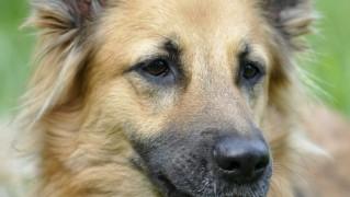 犬 動物 肖像画 頭 憂鬱 友人