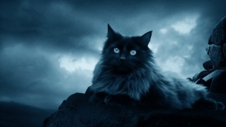 dark_cat_sitting_on_stormy_hill-wide