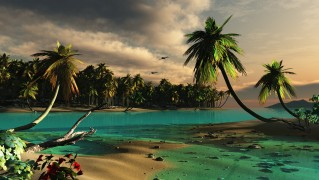 dreamy_palm_trees_beach-wide