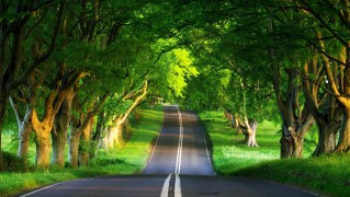greentrees_country_road-wide
