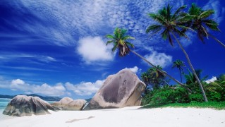 palm_trees_with_white_sand_beach-other