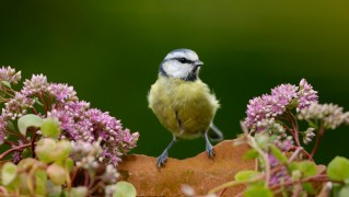Beautiful-Bird-and-Flowers