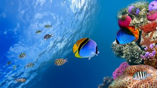 Beautiful-View-of-Fish-Swimming-Under-Water