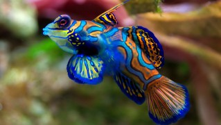 Blue-Painted-Colorful-Fish