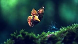 Butterfly-Flying