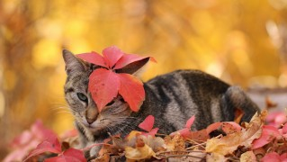 Cat-Covered-with-Autumn-Leaves
