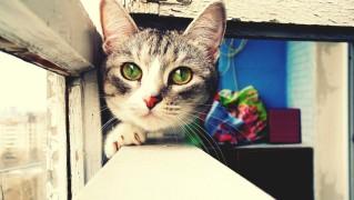 Cat-Head-Posing