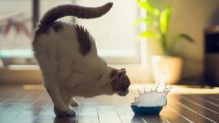 Cat-Watching-Drop-of-Milk