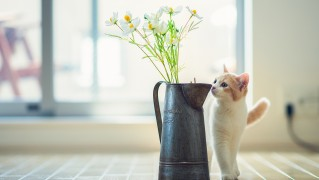 Cat-and-Flowers-Vase