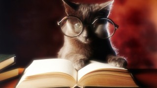 Cat-with-Reading-Glasses-and-Open-Book