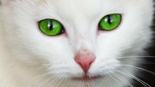 animal-17545_1280