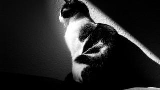 cat-288536_1280