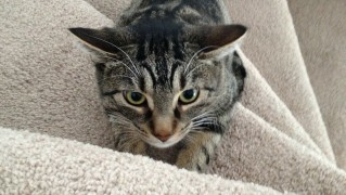 cat-324090_1280