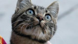 cat-64485_1280