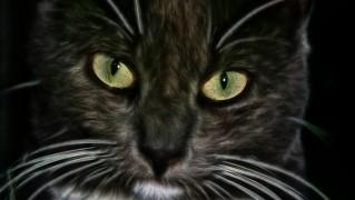 cat-75957_1280