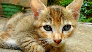 cats-205605_1280