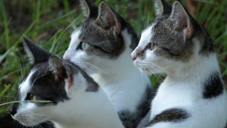 cats-238217_1280