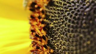 flower-179003_1280