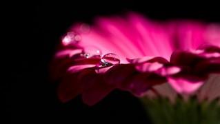 flower-56408_1280