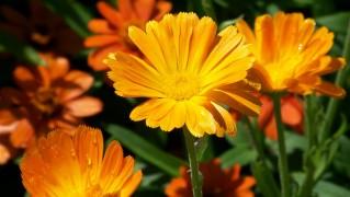 orange-17906_1280