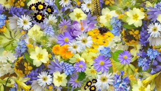 spring-flowers-110671_1280