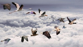 All-Bird-Kinds-Flying-Over-the-Clouds