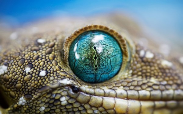 Blue-Eye-Macro-Closeup-of-Lizard