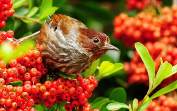 Brown-Bird-Looking-for-Food