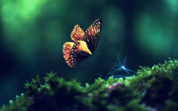 Butterfly-Flying