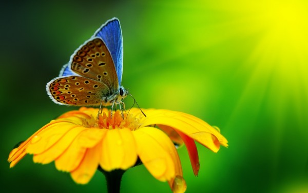 Butterful-Standing-on-Yellow-Flower