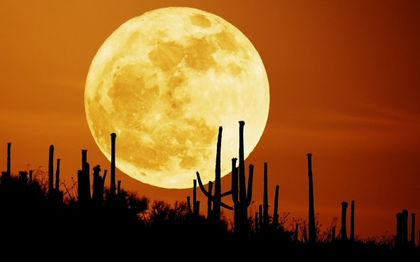 Cactus-Silhouette-Against-Big-Moon