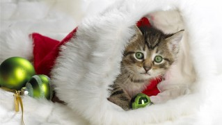 Cat-Inside-Christmas-Hat