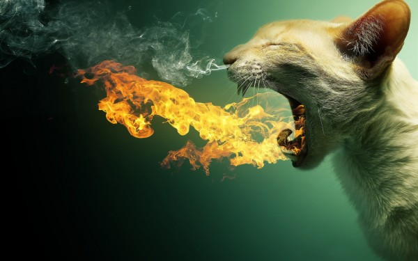 Cat-Spitting-Fire-Flames
