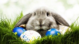 Rabit-with-Easter-Eggs