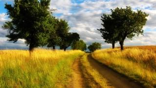 Road-Between-the-Grass