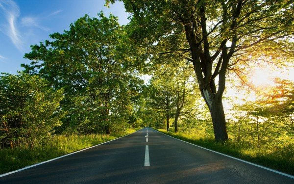 Road-with-Trees-on-the-Side