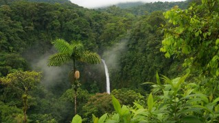 Small-Waterfall-in-Rainforest