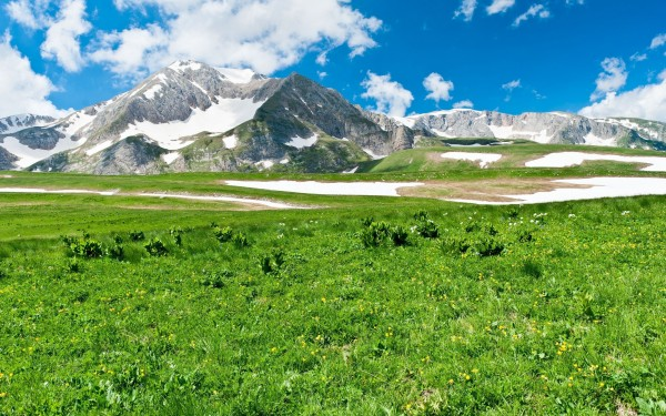 Spring-Green-Grass-with-Snow-Mountains