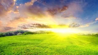 Sunny-Green-Field-Landscape