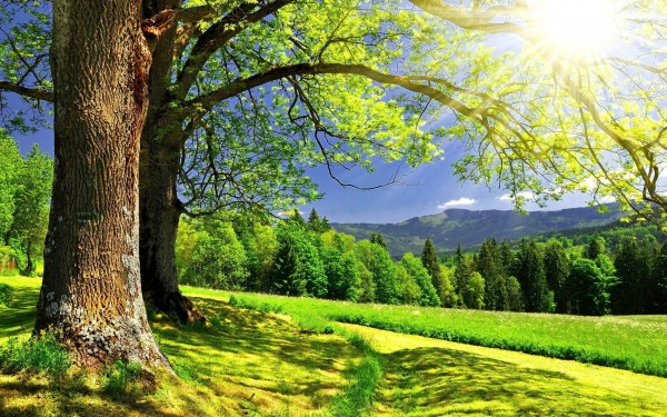 Tree-with-Sunrays-Landscape