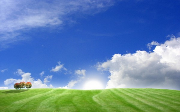Two-Trees-in-Green-Field-and-Blue-Sky-with-White-Clouds