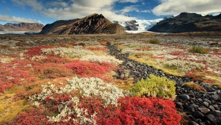 Valley-Landscape-with-Flowers-Growing