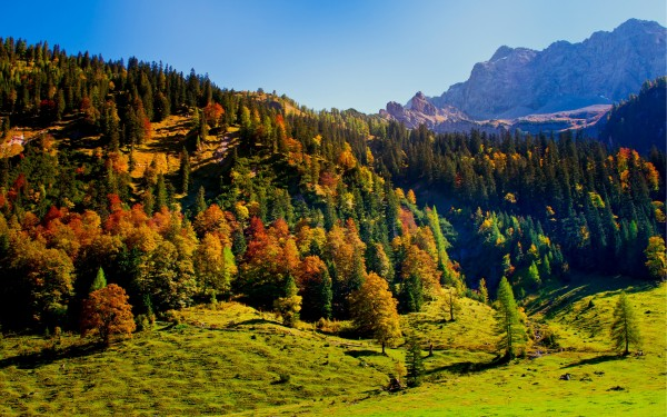 Valley-with-Trees-Landscape