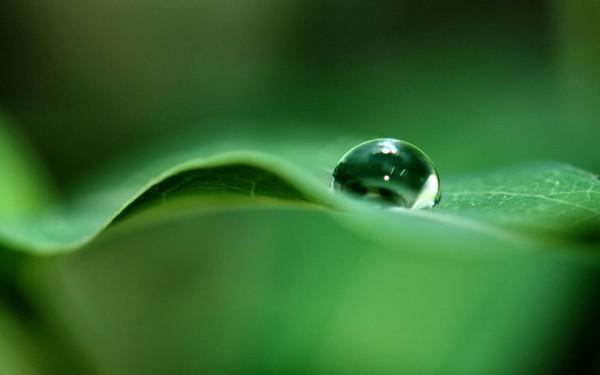 Waterdrop-Hanging-on-Green-Leaf
