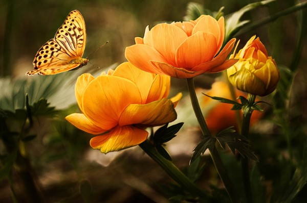 background-with-flower-and-butterfl-1326054113zvO