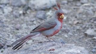 bird-1399121655HnR