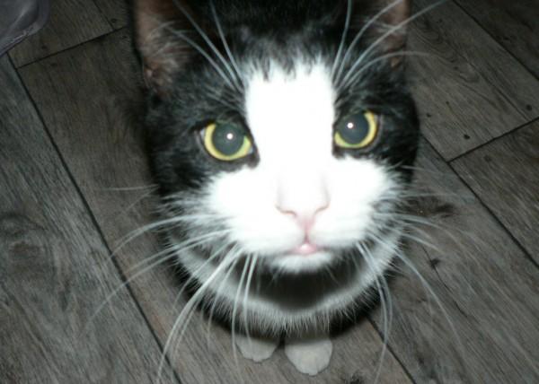 black-and-white-cat
