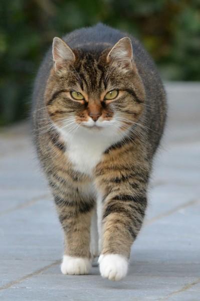 cat-238394_1280