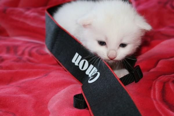 cat-317106_1280